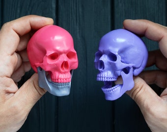 Human skull - Real human skull made of plastic. Handmade model. 7 colors. Free shipping!