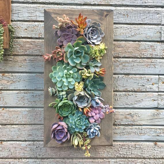 Succulent Vertical Garden 20x10 Living Wall Flower | Etsy