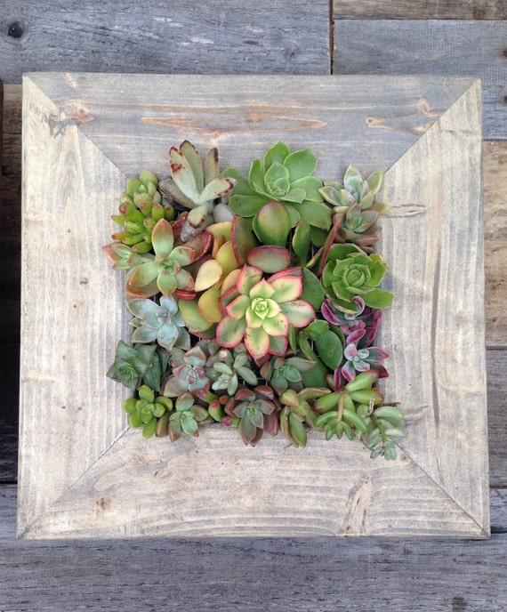 Vertical Garden 10x10 Living Wall Succulent | Etsy