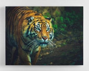 Scouting Tiger - Tiger Canvas Wall Art - Tiger Art, Tiger Canvas, Tiger Photography Art, UK Art, Tiger Art, Home Decor