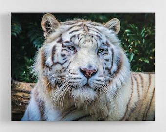 White Tiger - Tiger Canvas Wall Art - Tiger Art, Tiger Canvas, Tiger Photography Art, UK Art, Tiger Art, Home Decor
