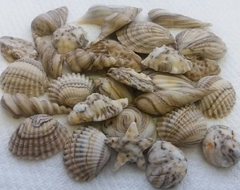 24 Shells Edible Cake Toppers Fondant Icing