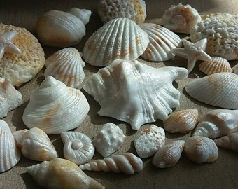 30 Shells Edible Cake Toppers Fondant Icing Shimmer