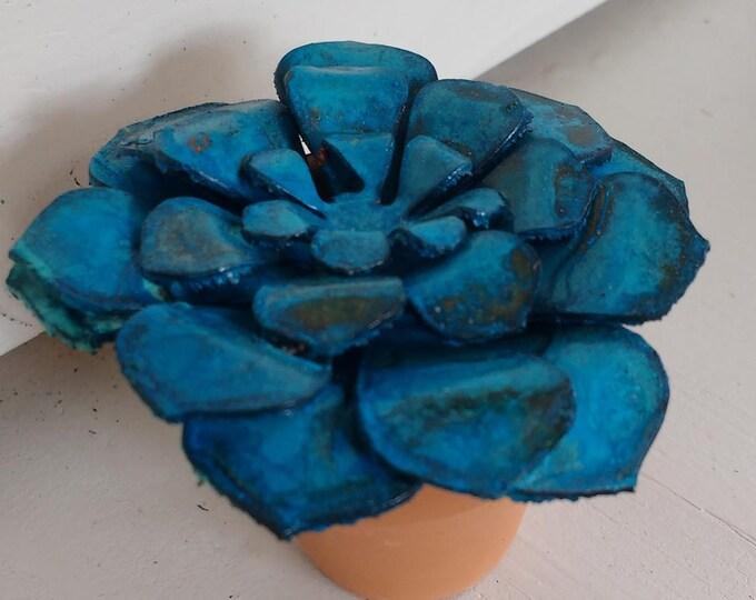 Patina Echeveria Minima Succulent