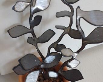 Steel Golden Teardrop Succulent