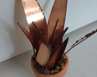 Copper Aloe Vera Succulent