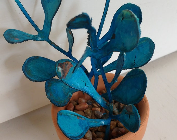 Patina Jade Plant Succulent