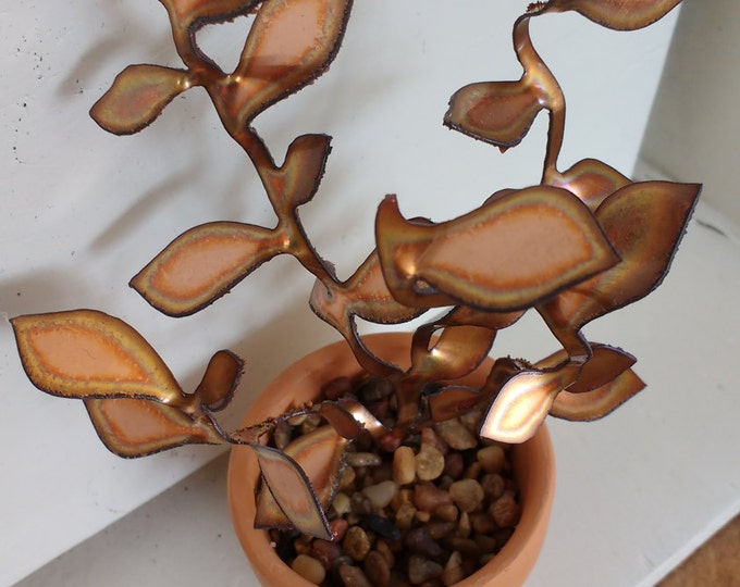 Copper Golden Teardrop Succulent