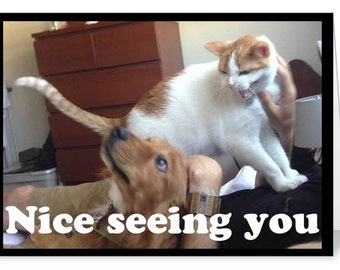 Cat Card - Funny Animal Card - Nice Seeing You