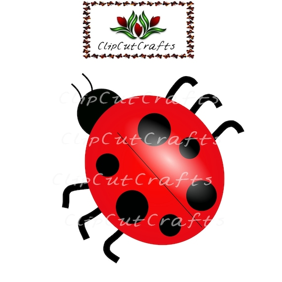 Insecto de Mariquita lady bug Animal dibujos animados Color diseño ...