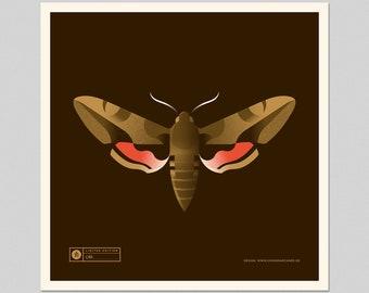 Hawkmoth Screenprint  Limited Edition