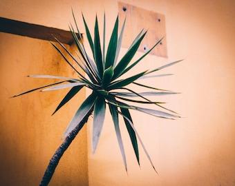 Mexican Tree Fine Art Photograph Print