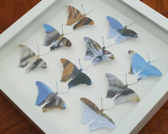 Unique Butterfly Papercut Picture