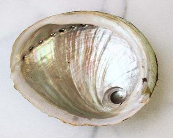 One Abalone Shell | Large Abalone Shell | Medium Abalone Shell | Abalone Smudge Bowl | 5 inch Abalone Shell | Smudge Tools | Boho Decor