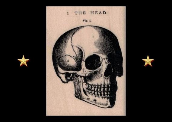 SKULL Rubber Stamp Skeleton Sugar Skull Pirate