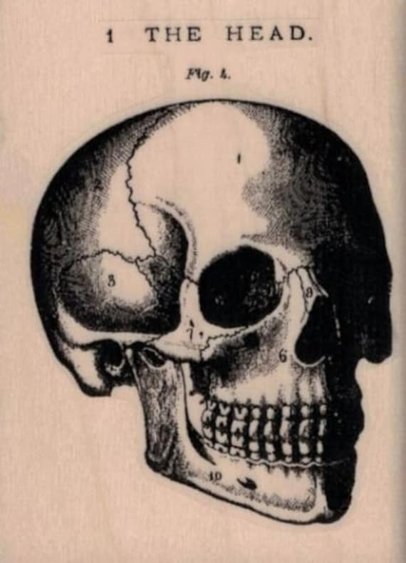 SKULL Rubber Stamp Skeleton Sugar Skull Pirate