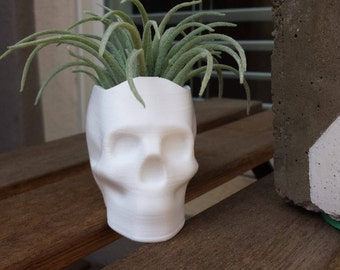 Skull Planter, Succulent Planter, Air Planter Many Colors