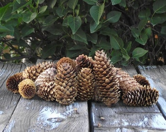25 Spruce Pine Cones - Hand-gathered From The High Country of Colorado - Excellent for decorating, scenting, painting, etc.