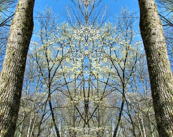 Mirror Image // Elkmont // GSMNP