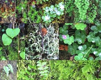 Live Moss Vivarium Decor Terrarium miniature Garden fairy garden terrarium decor Live lichen florist style Mas covered twigs