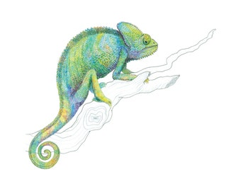 Color Me Chameleon
