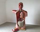 Medical vintage human body First Aid Large size Hungarian educational study doctors decor Anatomy Hospital