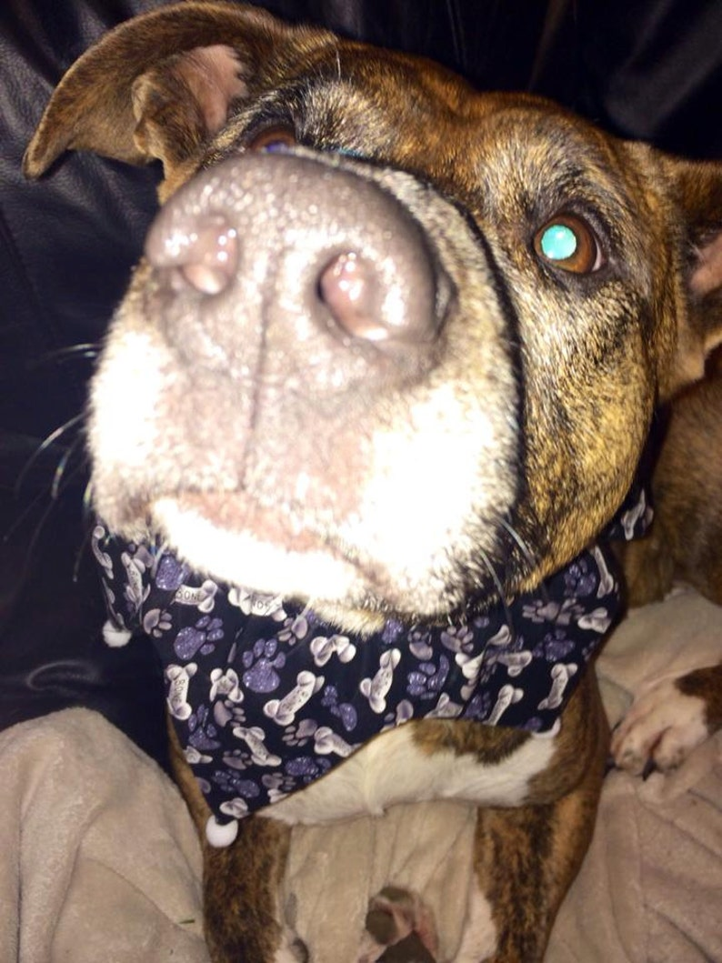 Bone Dog Scarf