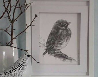Bird. Original graphite pencil drawing. 11 X 14 Inc. /27.9 X 35.6 cm./ Mixed media vellum surface paper 300g/m. Nature picture. Wild life