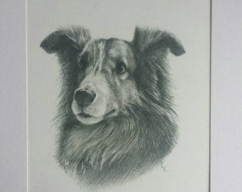 Dog portrait.  Pet portrait. 9 X 12 in. (22.9 X 30.5 cm) on vellum surface paper . (140lb). graphite pencil.  Custom pet portrait. Dog.