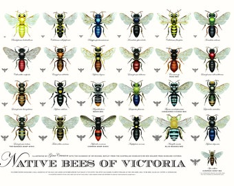 Native Bees of Victoria (third edition)
