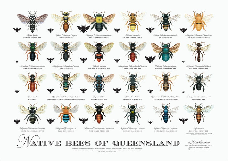 Native Bee Poster | Stay At Home Mum