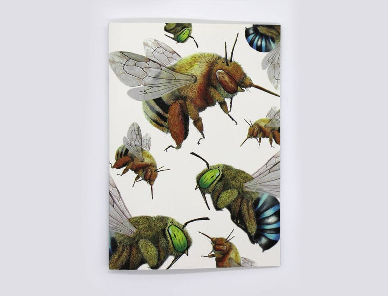 4-pack Blue-Banded and Teddy Bear Bee cards image 0