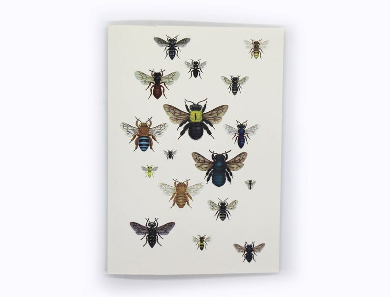 4-pack Australian native bee squadron card image 0