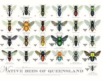 Native Bees of Queensland poster (third edition)