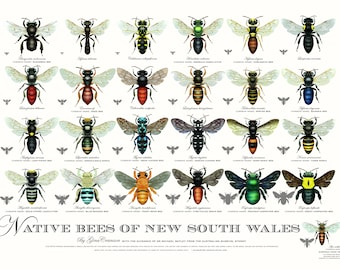 Native Bees of NSW Poster (4th edition)