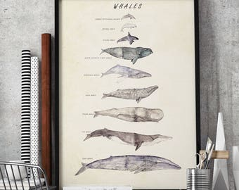 whales, whale illustration, whale print, nautical decor, marine art, picture of whales, whale species, whale screen print, whale watercolor