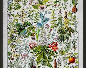 Medicinal Plants, Larousse antique book print, medicinal herbs, hardy plants, ethnobotany plants, botanical prints, kitchen wall art L2