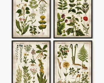 Medicinal plants Old book pages Medicinal poster Antique french plate  Rustic kitchen art Wall art Botanical poster Set of 4  212 76829bcbffed4