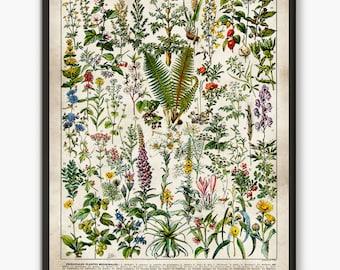 Botanical poster  cf9053c0cde84