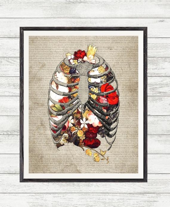 Brustkorb anatomische Blumen Anatomie Blumenkunst   Etsy