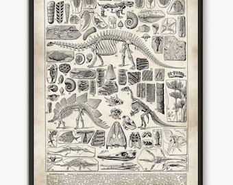 Dinosaur art print, Larousse book plate, paleontology decor, jurassic poster,paleontology illustration, wall art poster,science poster, L24