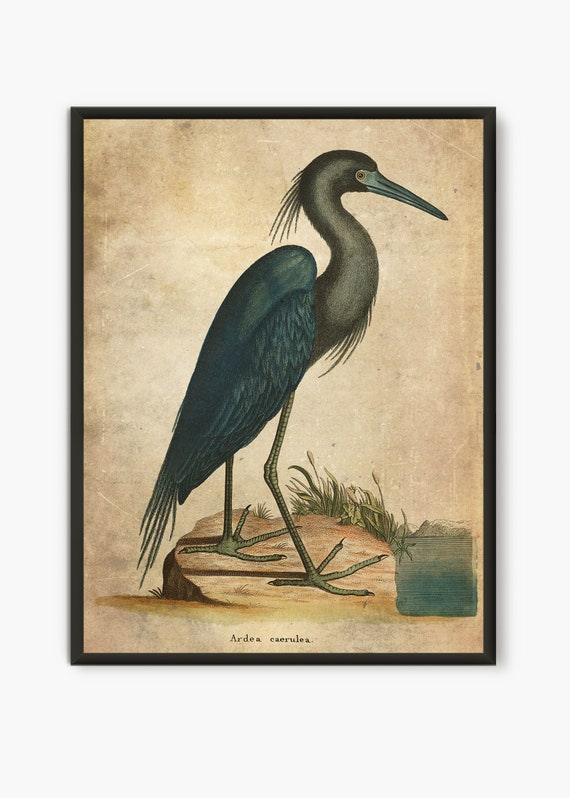 Great blue Heron by Audobon art print on 230gsm photo paper choose size