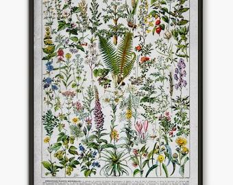 Medicinal Plant, Larousse Book, medical herbs poster, vintage flower wall art, botanical wall art, wild forest plant, botanical  poster L1