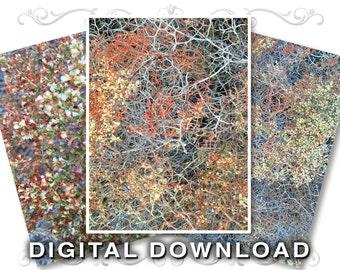Nature Clip Art Stock Photos | Digital Scrapbooking Backgrounds | Southwest Desert Bush | Small Business & Commercial Use | Bush01