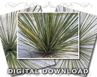 Nature Clip Art Stock Photos | Digital Scrapbooking Backgrounds | Southwest Desert | Yucca Plant | Small Business & Commercial Use | Plant02