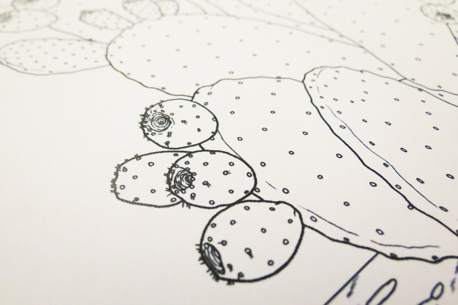 Prickly Pear Cactus Coloring Page (Digital Download PDF)