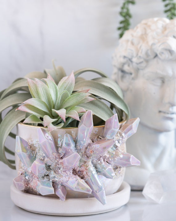 Made-To-Order: Aura Prism Succulent Pot w/ Attached Dish