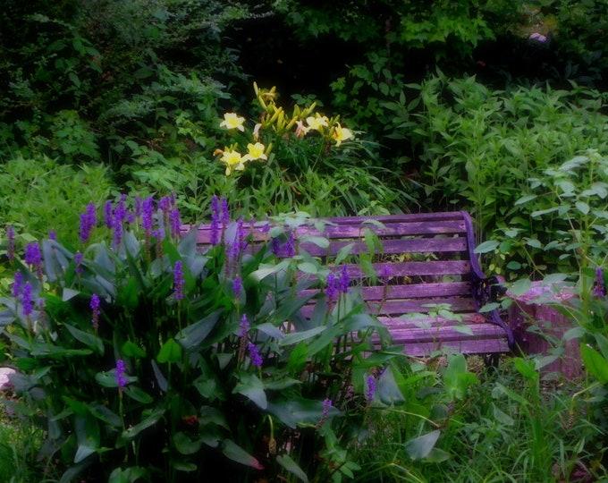 Garden bench serenity, purple, green, yellow, flowers