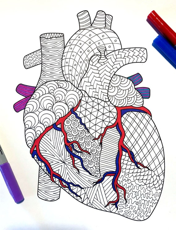 - Heart Human Anatomy PDF Zentangle Coloring Page Etsy