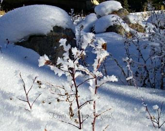 Hoar Frost in Dutch Creek, Alberta
